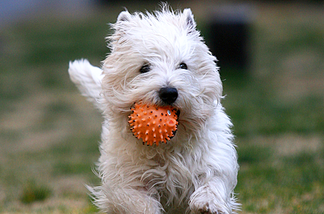 General Image - Dog with Ball